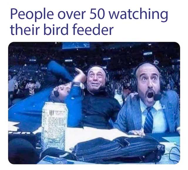 People over 50 watching their bird feeder