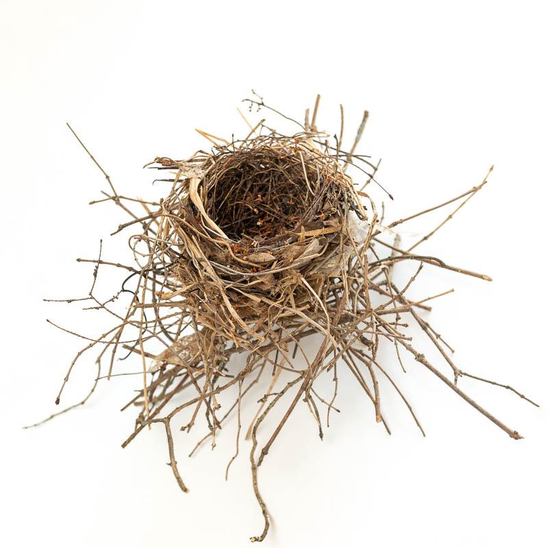 Abandoned Catbird Nest