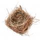 Empty Bluebird Nest